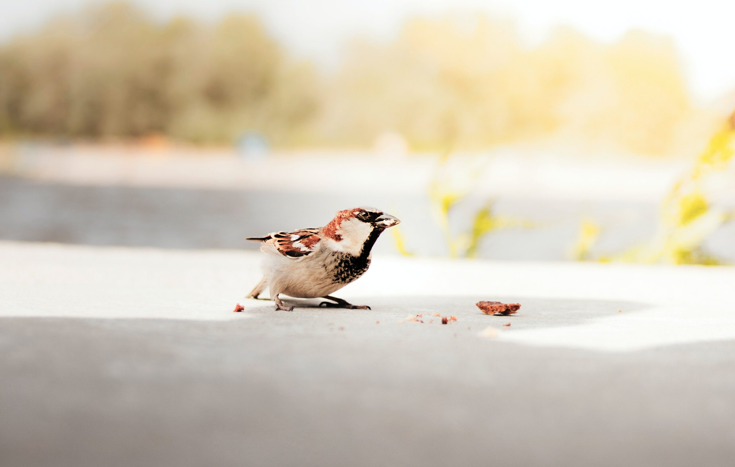 Photo of bird following crumbs. Photo Photo by Dominika Roseclay from Pexels